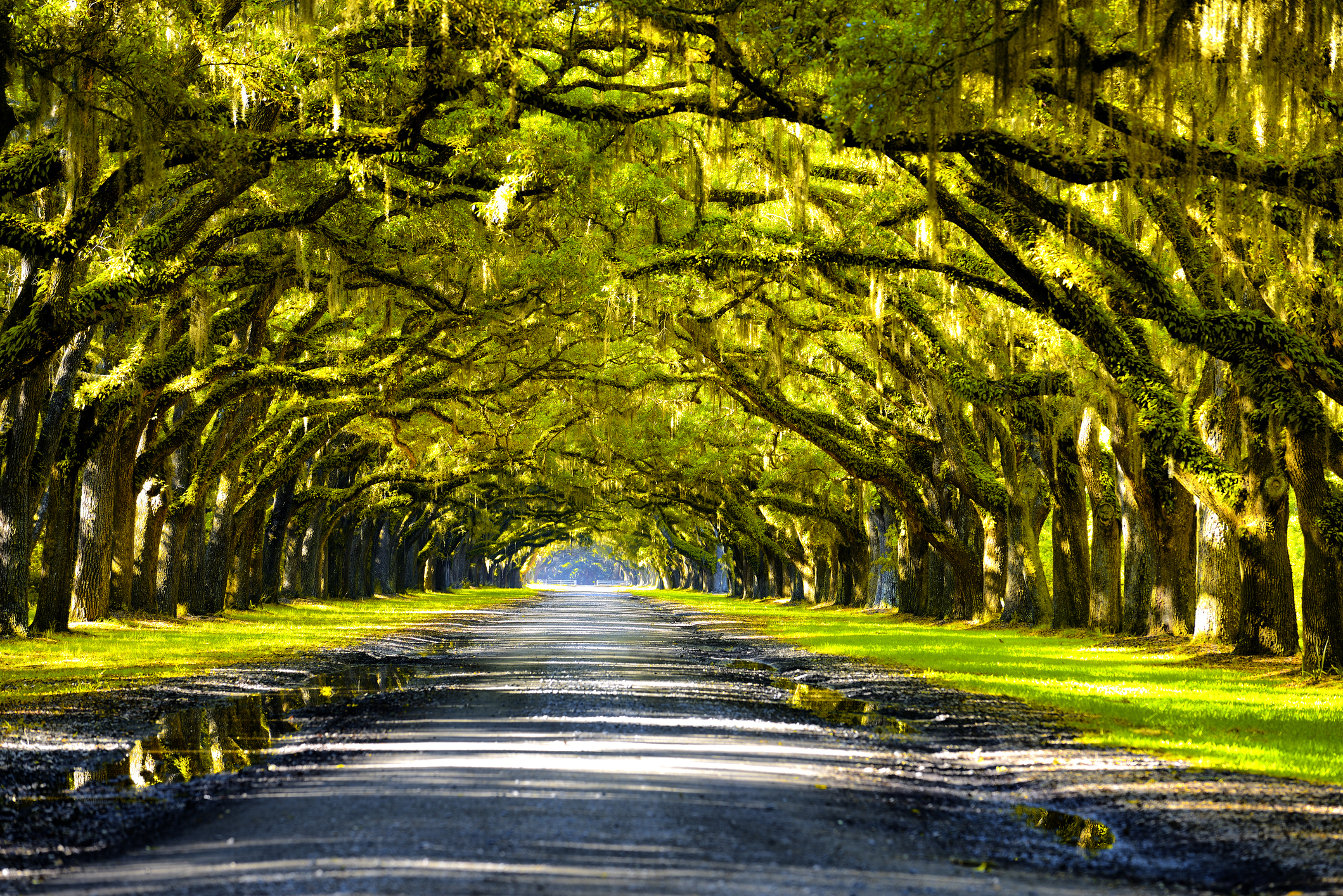 New Orleans' Most Famous Plantation Tours (Updated March 2021)